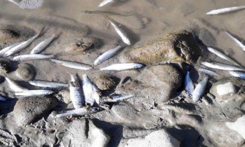 تلف شدن ماهیان رودخانه دز به دلایل نامشخص