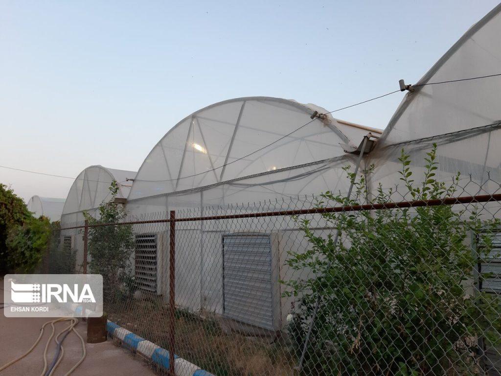 گلخانه در دزفول