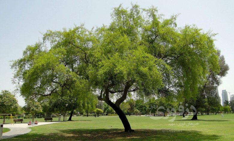 باغ کنارستان دزفول