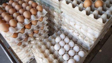 تصویر از استاندارد های نگهداری و عرضه تخم مرغ در فروشگاهها از ابتدای بهمن ماه اجباری می شود
